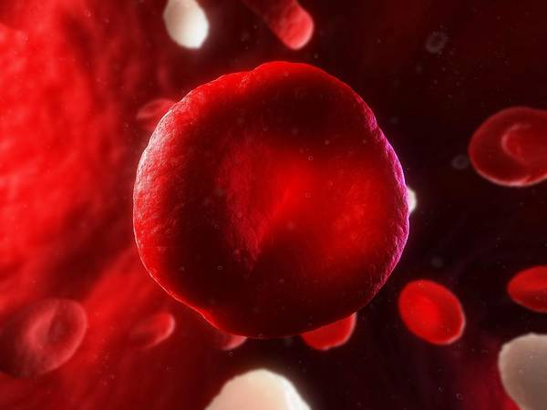 Artwork Art Print featuring the photograph Red Blood Cell, Artwork by Sciepro