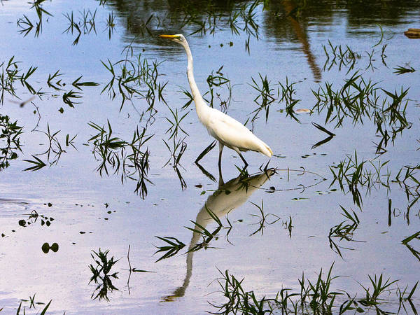 Amazon River Art Print featuring the photograph Reflections Of A White Bird by Robert Selin