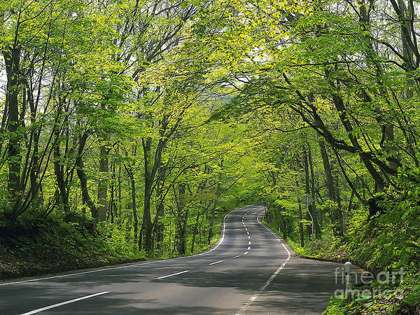 Great Smokey Mountains Photography Gatlinburg Tn Photos Road Tree Lined Road Driving Path Trail Nature Landscape Photos Art Print featuring the photograph Road To Gatlinburg Tn by Elizabeth Coats