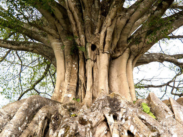 Roots Print featuring the photograph Roots by Heiko Koehrer-Wagner