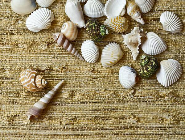 Shells Art Print featuring the photograph Seashells by Natalia Ganelin