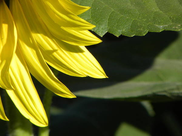 Flower Art Print featuring the photograph Sharp Shapes by Michael Snyder