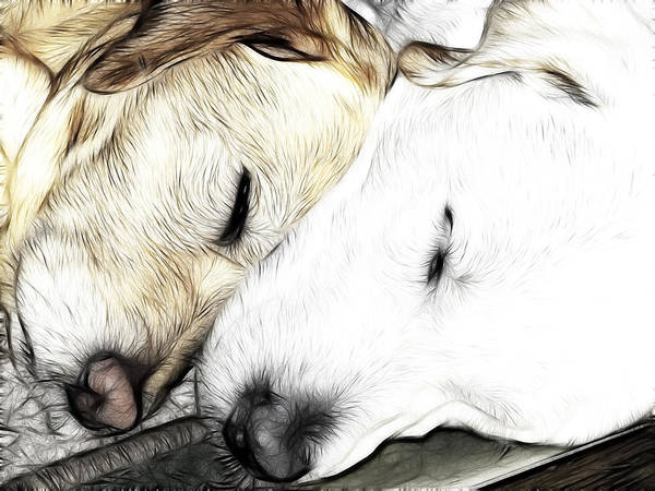 Adorable Art Print featuring the photograph Sleeping Monsters by Fiona Messenger