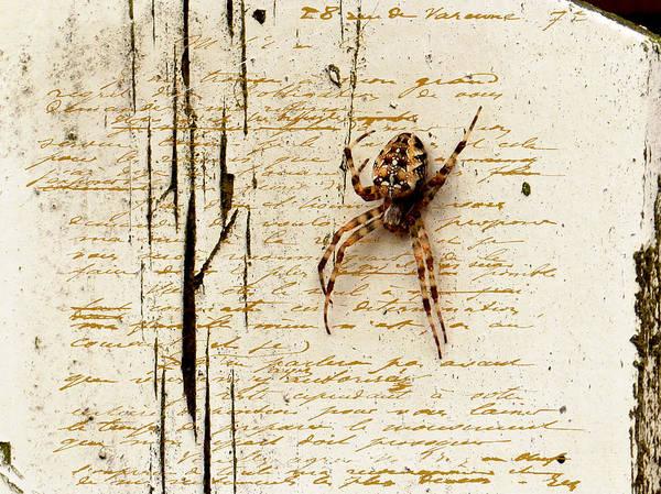 Spider Art Print featuring the photograph Spider Letter by Yvon van der Wijk