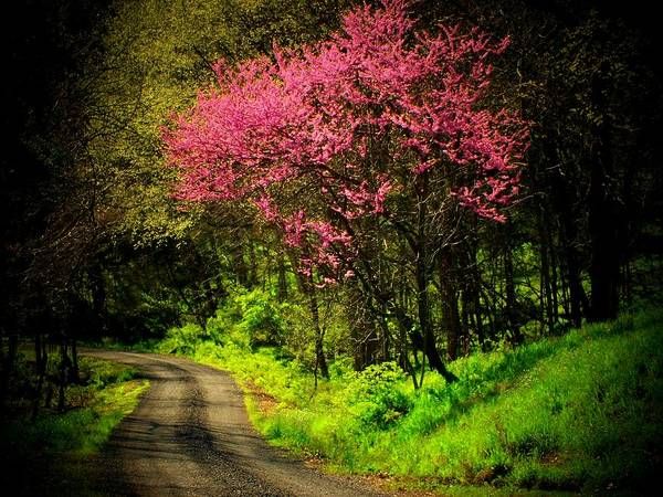 Mountain Road Art Print featuring the photograph Spring Mountain Road by Michael L Kimble