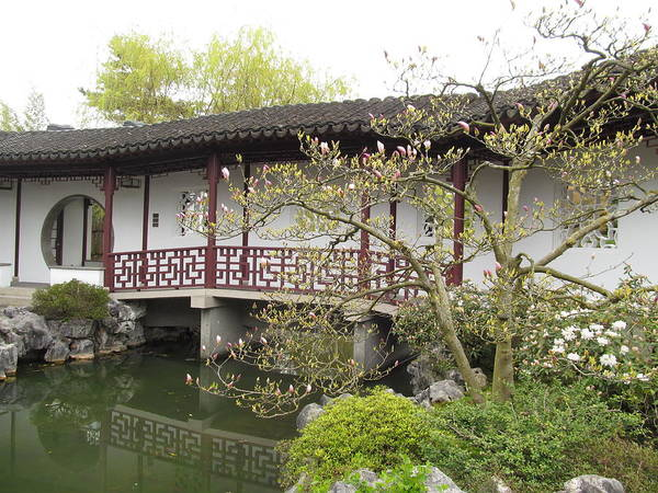 Chinese Gardens Art Print featuring the photograph Springtime In The Gardens by Alfred Ng