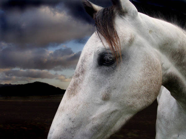Horse Art Print featuring the photograph Star by Maggie Dee