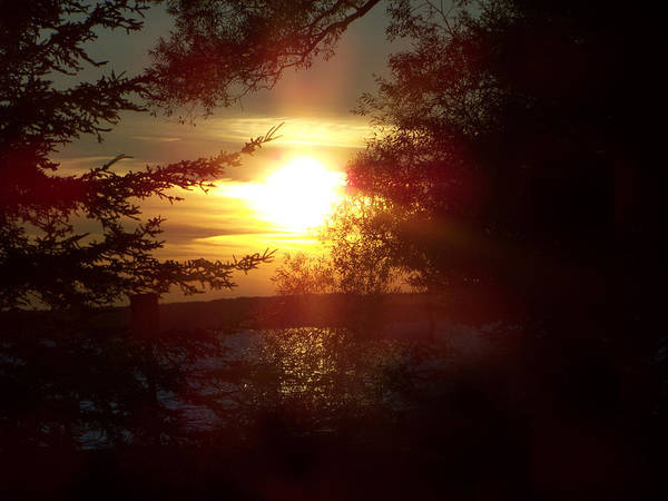 Landscape Art Print featuring the photograph Sunset Peaking Through The Trees by Jennifer King