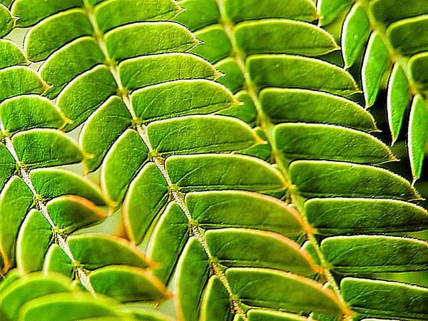 Textural Mimosa Art Print featuring the photograph Textural Mimosa by Beth Akerman