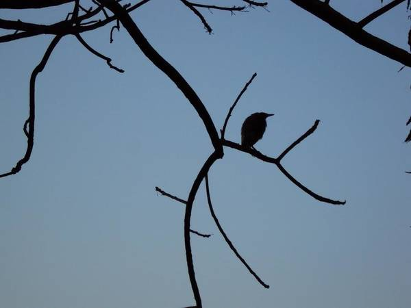 Photography Art Print featuring the photograph The Bird by Pranav Waghmare