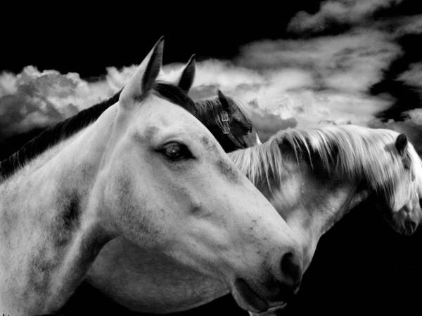 Black And White Art Print featuring the photograph The Wait by Maggie Dee