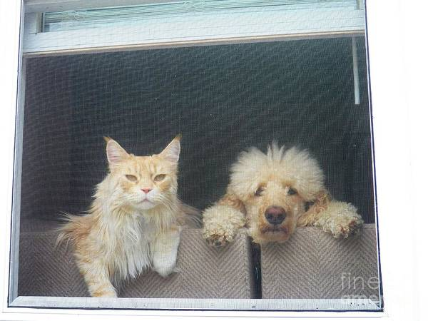 Dog And Cat Art Print featuring the photograph They Wait For Me... by Judy Via-Wolff