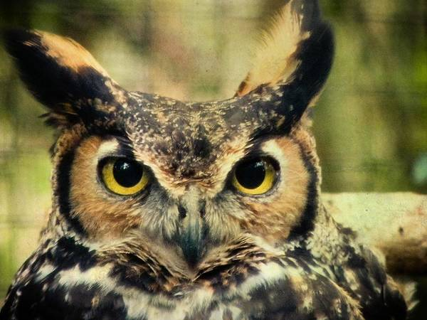 Owl Art Print featuring the photograph Tootsie by Trish Tritz