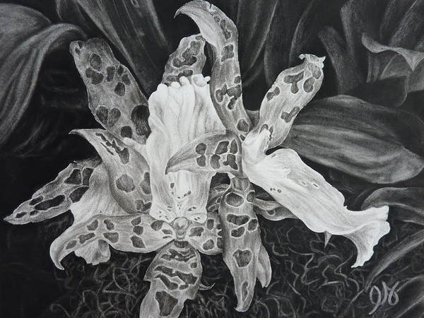 Orchid Art Print featuring the drawing Triple Orchid Blossom by Estephy Sabin Figueroa