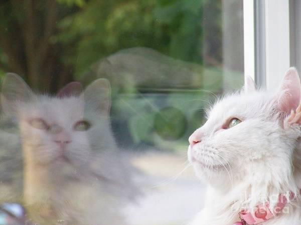 White Cat Reflection Art Print featuring the photograph We Gaze Heavenward by Judy Via-Wolff