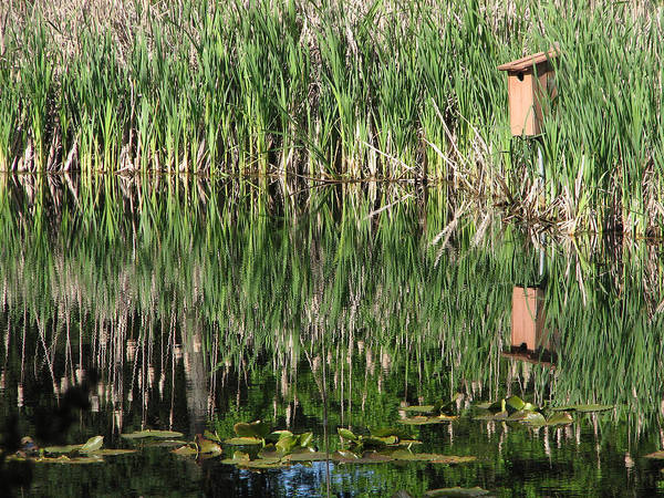 Art Print featuring the photograph Wetland Reflections by Chris Anderson