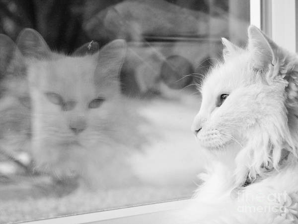 White Cat Art Print featuring the photograph White Cat Reflection With Fly by Judy Via-Wolff