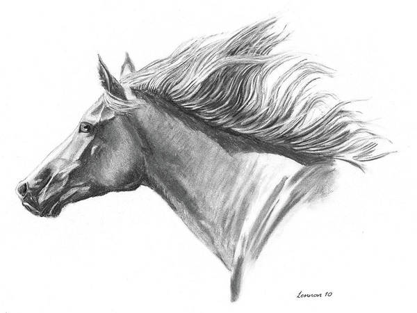 Horse Art Print featuring the drawing Wind In His Mane by Adam Lennon