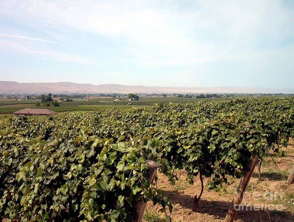 Wine Country Art Print featuring the photograph Wine Country by Charles Robinson