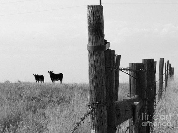 Wyoming Art Print featuring the photograph Wyoming Fence Line by David Bearden