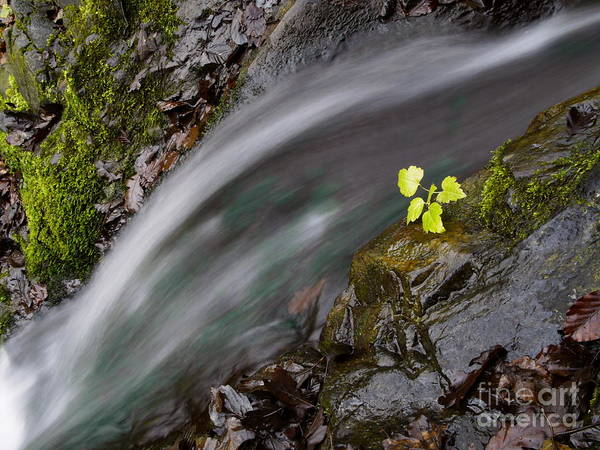 Nature Print featuring the photograph River by Odon Czintos