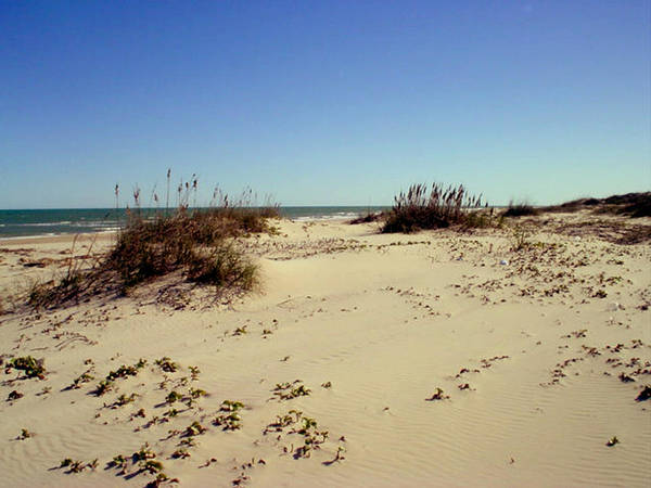 Sand Art Print featuring the photograph South Padre Island Dunes by Evelyn Patrick