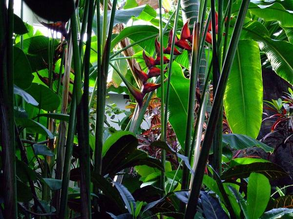 Jungle Art Print featuring the photograph Jungle Fever by Mindy Newman