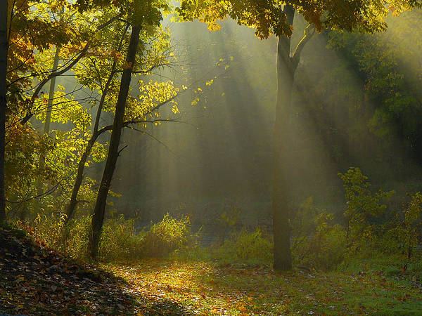 Sun Rays Art Print featuring the photograph Mystic Morning by Neil Doren