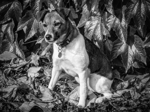 Dog Art Print featuring the photograph On The Leaves by Nick Bywater