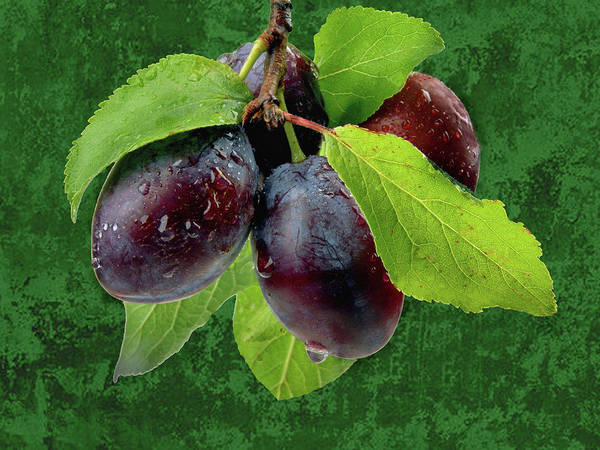 Plum Art Print featuring the photograph Plums by Manfred Lutzius