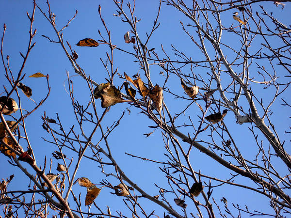 Nature Art Print featuring the photograph Autumn Wind by Marilynne Bull