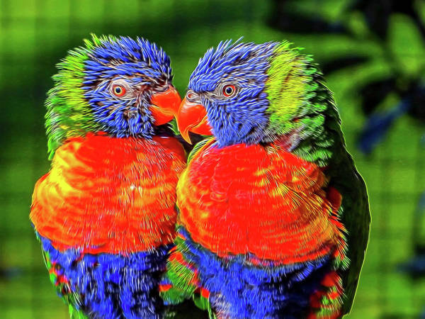 Lorikeets Art Print featuring the photograph Lorikeets. by Angela Aird