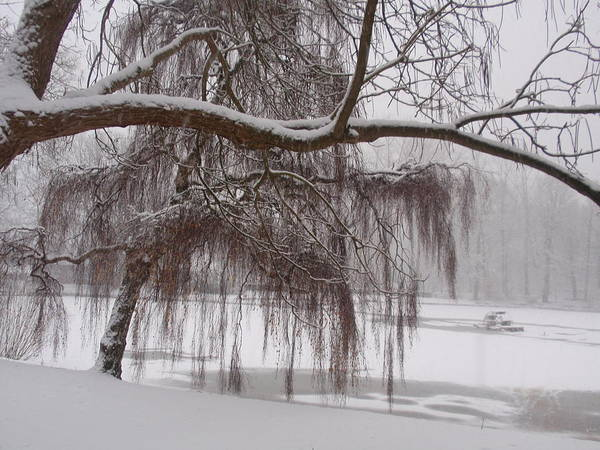Winter Art Print featuring the photograph Winter Beauty by Valia Bradshaw
