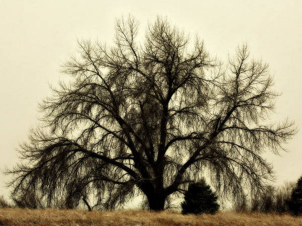 Tree Art Print featuring the photograph A Winter's Day by Marilyn Hunt