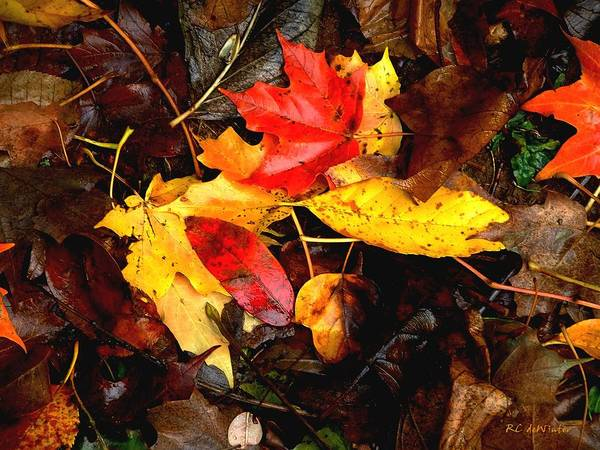 Autumn Art Print featuring the photograph After The Rains Of Autumn by RC DeWinter