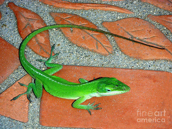 Nature Art Print featuring the photograph Anole On Chair Tiles by Lucyna A M Green