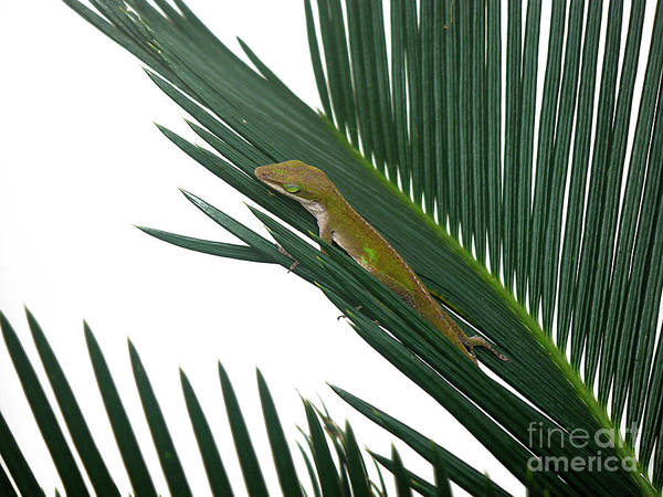 Nature Art Print featuring the photograph Anole With Palm - Coy by Lucyna A M Green