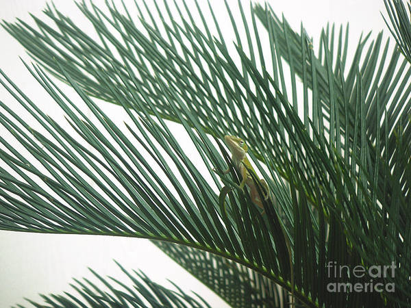 Nature Art Print featuring the photograph Anole With Palm - Entangled by Lucyna A M Green