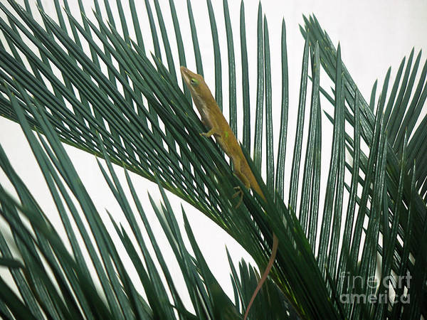 Nature Art Print featuring the photograph Anole With Palm - Looking Up by Lucyna A M Green