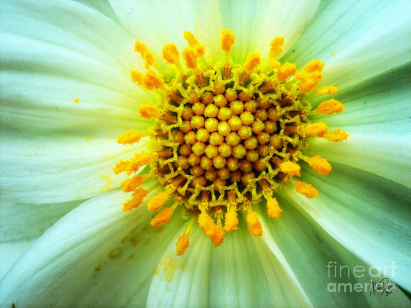 Flower Art Print featuring the photograph Aster Interior by Alina Davis