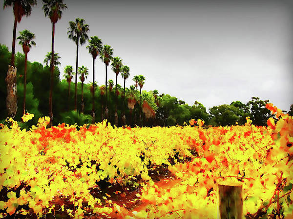 Palm Trees Art Print featuring the photograph Autumn Contrasts by Douglas Barnard