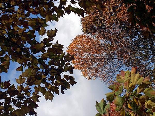 Autumn Art Print featuring the photograph Autumn Reflection by Caroline Urbania Naeem