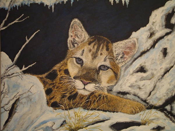 Baby Cougar Animal Nature Wildlife Snow Art Print featuring the painting Baby Cougar In Snow by Nick Gustafson