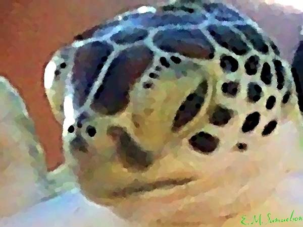 Turtle Art Print featuring the photograph Baby Turtle by Elise Samuelson