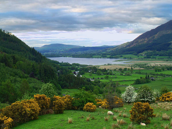 Lake Art Print featuring the photograph Bassenthwaite Lake by Steve Watson