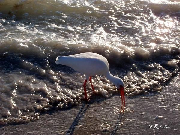 Beach Art Print featuring the photograph Beach Bird by Elizabeth Klecker