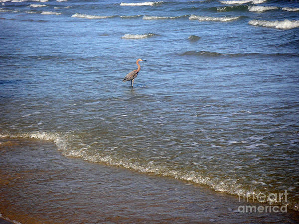Nature Art Print featuring the photograph Being One With The Gulf - Detached by Lucyna A M Green