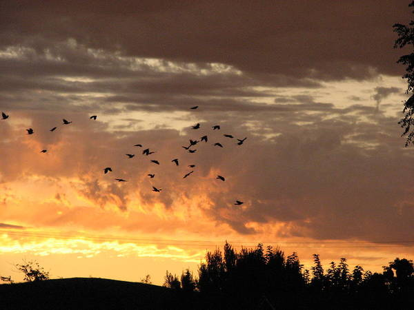 Birds Art Print featuring the photograph Birds In The Sky by Kathy Roncarati