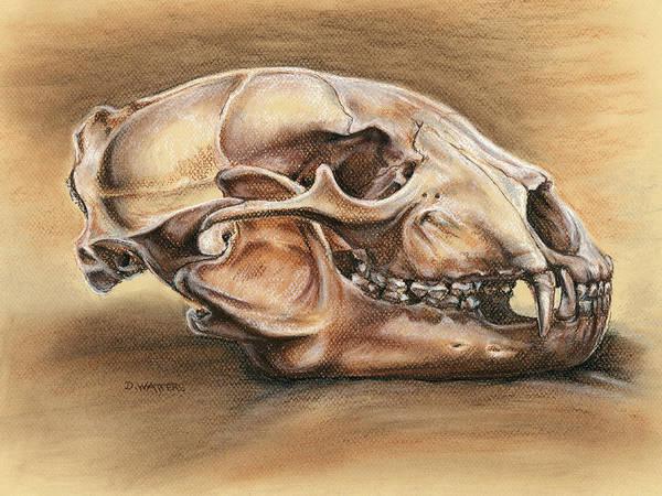 Bear Print featuring the drawing Black Bear Skull by Darlene Watters