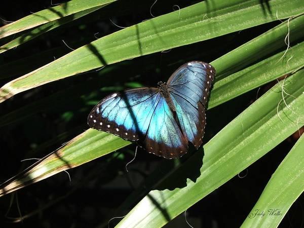 Blue Art Print featuring the photograph Blue Beauty by Judy Waller